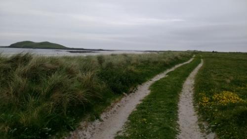 Grassy sandy trail